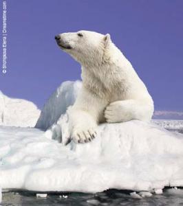 4-white-bear